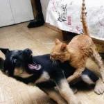Приколы про животных кошек и собак