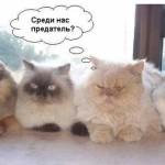 Прикольные коты и собаки — фото