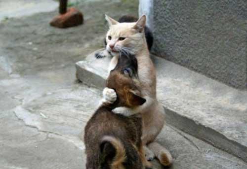 Прикольные коты и собаки - фото