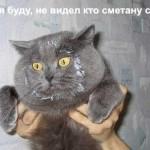 Фото — прикольные коты