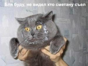 Фото - прикольные коты