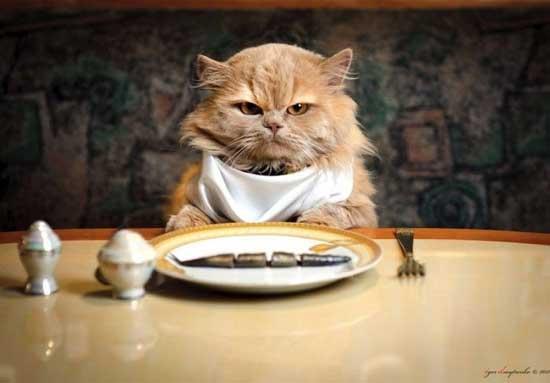 Приколы про котов и еду