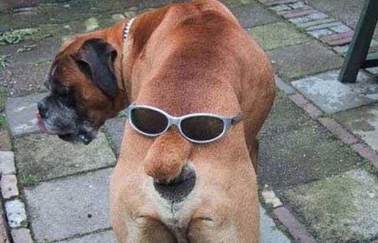 Фотоприколы с животными смешные до слез