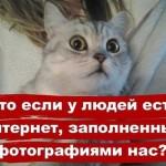 Кошки — фото приколы с надписями