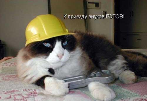 Кошки - фото приколы с надписями