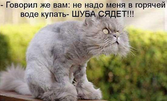 http://smehotisha.ru/wp-content/uploads/2015/07/koshki_prikoly_05.jpg
