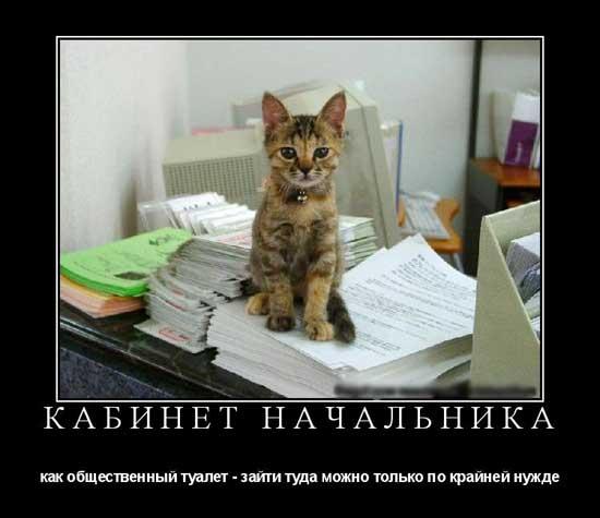 Прикольные статусы про начальников