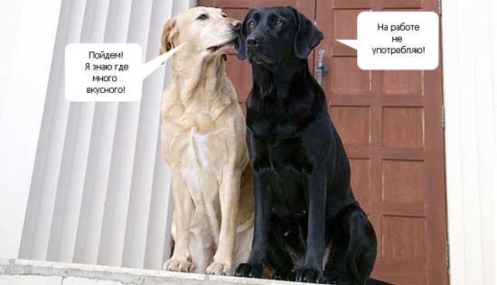 Смешные диалоги животных