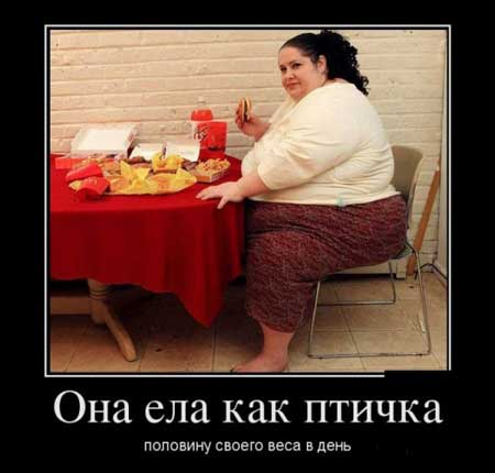 Картинки по запросу смешные картинки про диету