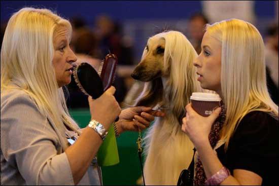 Приколы про блондинок