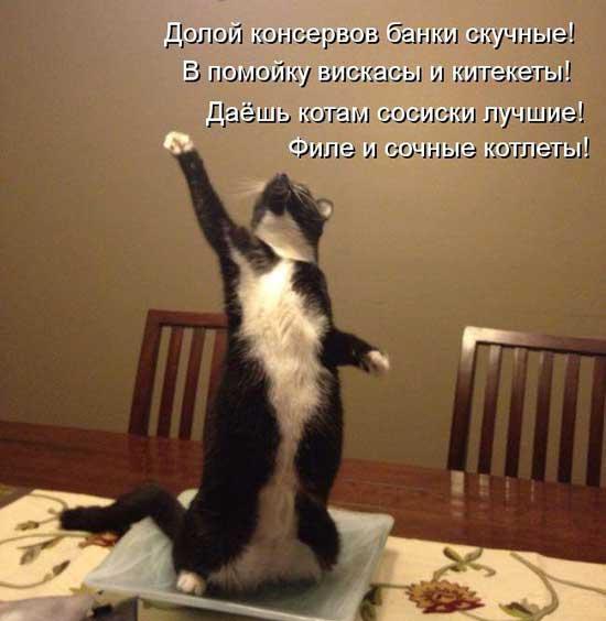 Смешные стихи про котиков