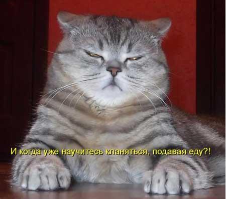 картинки с котятами смешные и прикольные с надписями