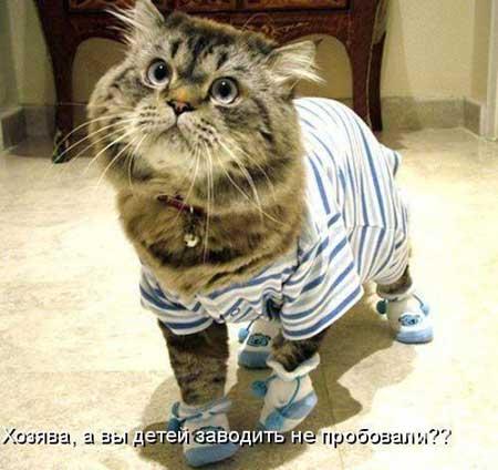 Прикольные фото котов с прикольными надписями