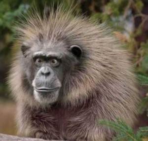 Смешные картинки про животных