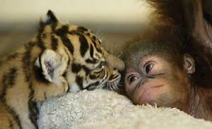 Фотки милых животных