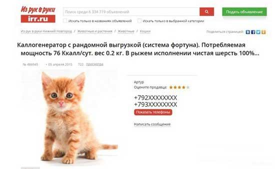 Прикольные объявления о продаже котят