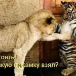 Смешные животные — фото с надписями