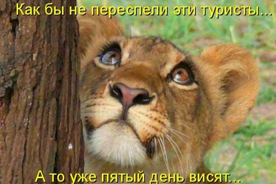 работа с животными в москве в зоопарке