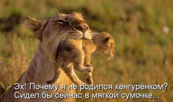 Смешные животные - фото с надписями