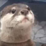 Видеоролики про животных