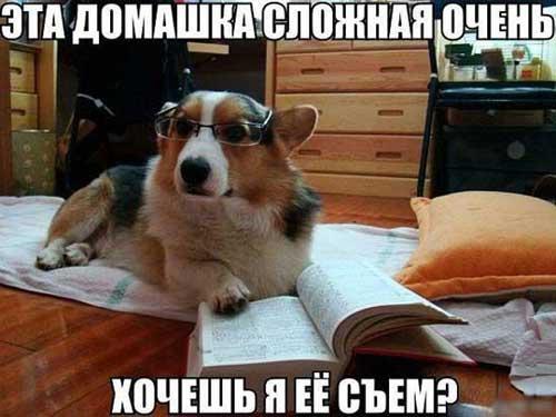Фото собак с надписями