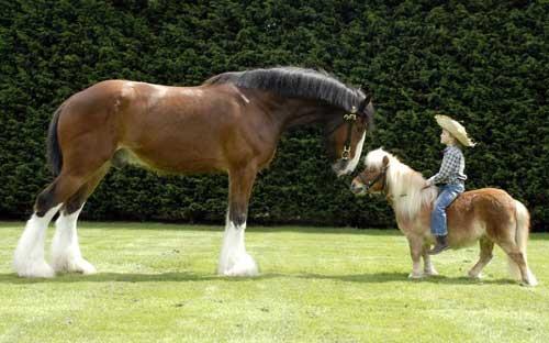 Смешные картинки пони