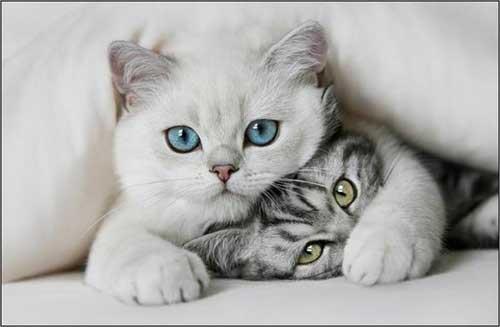 Прикольные картинки кошек и котов