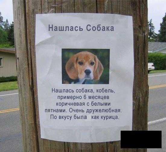 Смешные объявления про животных