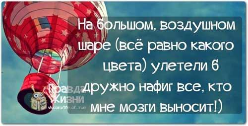 Западно сибирская лайка фото и цена