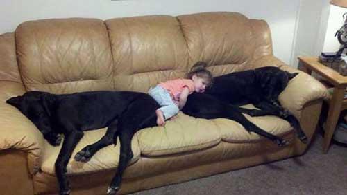 Прикольные фото с собаками и детьми