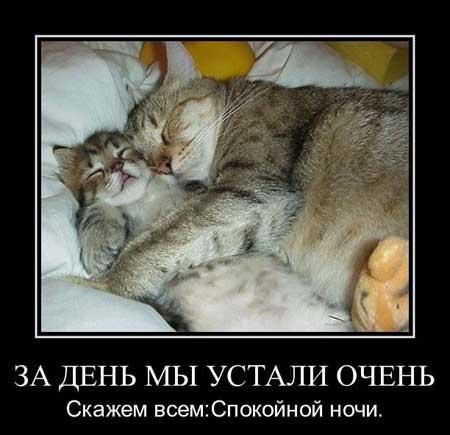 Демотиваторы спокойной ночи