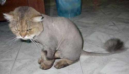 Прикольные стрижки котов
