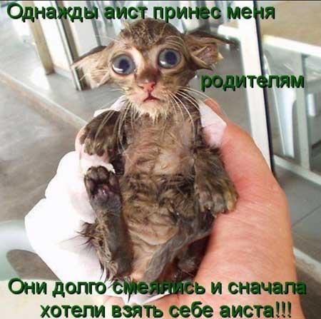 Прикольные фотографии животных с надписями