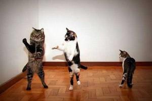Смешные видео про танцующих кошек