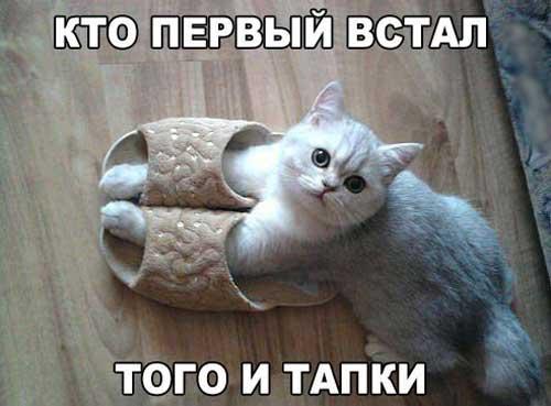 http://smehotisha.ru/wp-content/uploads/2016/05/prikoly_s_koshkami_08.jpg