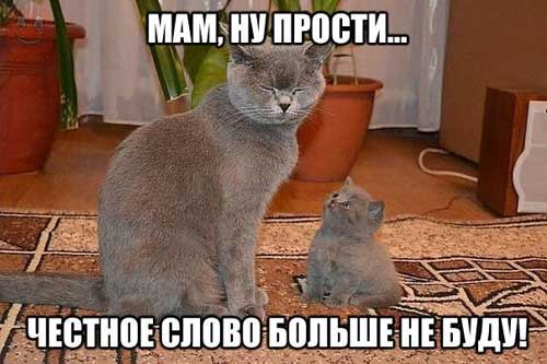 http://smehotisha.ru/wp-content/uploads/2016/05/prikoly_s_koshkami_13.jpg