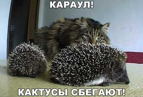 Самые ржачные приколы с кошками