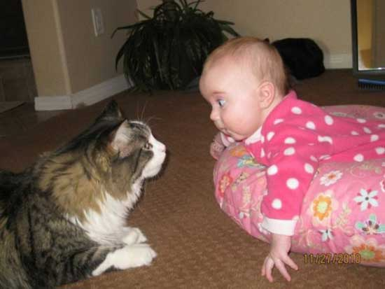 Смешные фото детей и животных