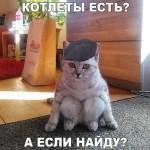 Смешные фото про кошек с надписями