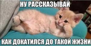 Смешные картинки про жизнь