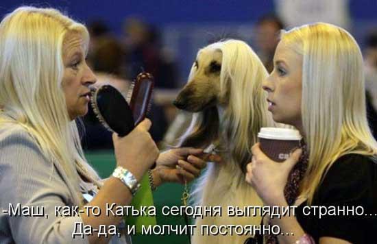 Смешные фото блондинок