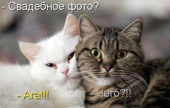 Смешные фото про котов и кошек с надписями