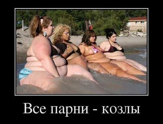 Прикольные фото про толстых