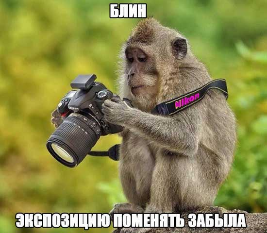 Фото с обезьянками и надписями