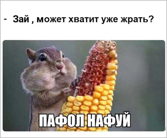 Забавные картинки с надписями о любителях поесть