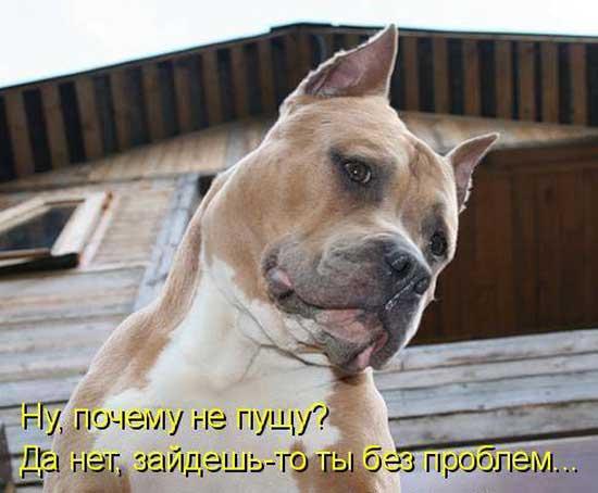 Фото смешных собак с надписями