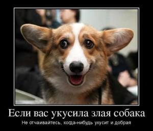 Смешные фразы о собаках