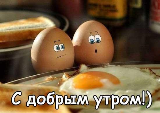 Смешные фото с добрым утром