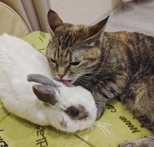 Приколы про кроликов - фото