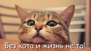 Смешные цитаты про кошек